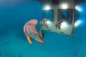 underwater hotel room at night. How It Works Underwater Hotel Room At Night