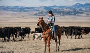 you don t know the middle of nowhere until you ve seen the big sky beauty of wyoming autumnal gold fields are polka dotted with black cattle