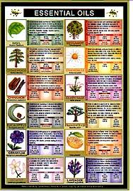 Essential Oils Pest Control Chart Decoder Charts Wholistic Health Massage Awareness Spirituality