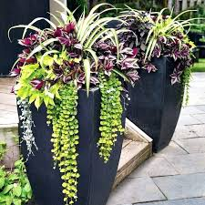 best plants for patio pots patio pots and planters beautiful with best patio planters ideas on best plants for patio pots