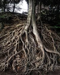 roots essay three essentials for photographers when