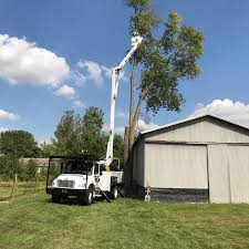 at tree service by robu0027s our goal is to give you the most superior service while keeping affordability as top priority we also have an isa certified robs tree service79