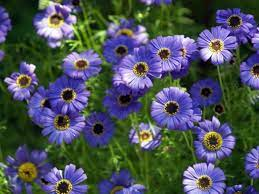 annuals for rock gardens and small