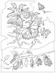 Small Picture Coloring Pages Home Free Download Pac Butterfly On A Flower Page