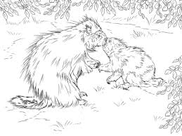 Small Picture North American Porcupine with Baby Coloring page for kids