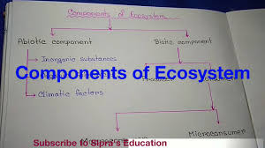 Components Of Ecosystem Part 1 Represent As A Chart Diagram Described In Bengali Language