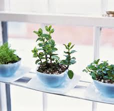 Terrace and Garden: Wooden Sitting Pretty Herb Gardening - Herb Garden