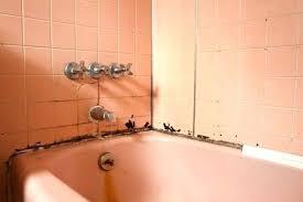 mold in shower caulk black mold in shower caulk old bath in need of repair black spots on shower caulking black mold in shower caulk mold shower caulk