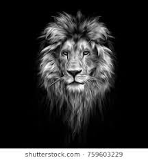 black and white lion portrait. Contemporary Black Portrait Of A Beautiful Lion Lion In The Dark Oil Paints Intended Black And White Lion N