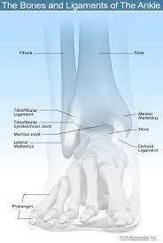 broken ankle vs sprain symptoms and