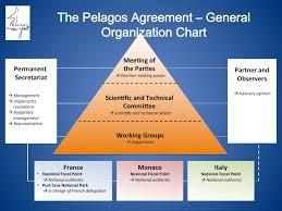 General Organization Chart