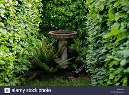 Bird Bath Garden Design Bird Bath Dryopteris Fern Beech Hedge Garden Feature