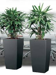 Office pot plants Extra Large Planters 26 Plant Care Aliexpresscom Buy Indoor House Office Plants Online Uk Wide Delivery