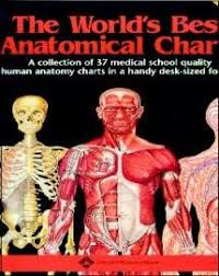 World S Best Anatomical Charts The Worlds Best Anatomical Charts