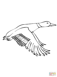 Small Picture Coloring Pages Flying Mallard Duck Coloring Page Free Printable