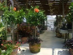 custom potted plants tree nursery tampa s35