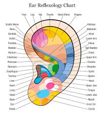 Reflexology Chart Ear Reflexology Chart Description White