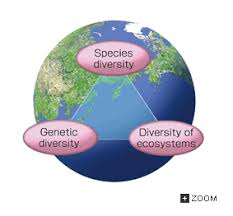 Species Diversity Definition 12 5 Conservation Of Biological Diversity And The Global Environment