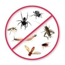 Image result for pests