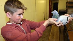 I cried when one bird flew home with a broken leg' - BelfastTelegraph.co.uk