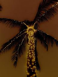 a variety of artificial palm tree includes one with ropes of lights this palm tree is called rope light palm tree in which usually led lights are used