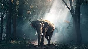 Elephant HD Wallpaper 1080P (Page 2 ...