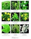 plants, medicinal