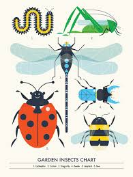 Garden Insect Chart