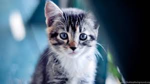 cute kittens wallpapers for mobile. Exellent For Netbook  For Cute Kittens Wallpapers Mobile