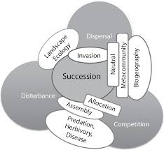 Primary Succession And Secondary Succession Venn Diagram Synthesis Part 4 An Integrative Approach To Successional