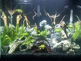 Petco Aquarium Plants Cryptohut