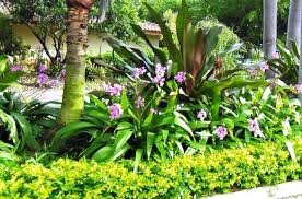 Small Picture Tropical Landscaping Ideas For Backyard Tropical Landscaping Ideas