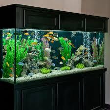 55 gallon planted angel fish tank | Fish | Pinterest | 55 gallon, Angel fish  and Fish tanks