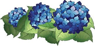 Image result for hydrangea clipart