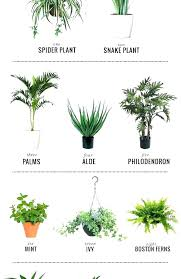 No Sunlight Tall Office Plant Artificial Plants Indoor Display Ideas That Are Borderline Genius Low Ligh Ieq Indoor Plants Best Indoor Plants Low Light Tall Awesome House Office Plant Hkarthik