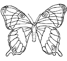 Small Picture Sweet Looking Pictures Of Animals To Color Butterfly Drawings In