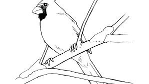 Cardinal Bird Coloring Page Fanciful Cardinal Bird Coloring Page