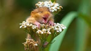 Bildresultat för söta djur