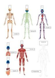 Body Systems Chart Human Body Systems Flip Chart