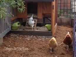 Dreaming Of Home Backyard Chickens And Amazing Chicken CoopsBackyard Chicken Blog