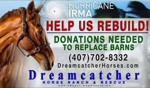 Dream Catchers Horse Ranch Dreamcatcher Horse Ranch Rescue Needs Help South Lake Tablet 54
