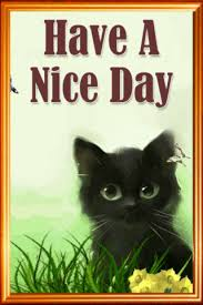 Image result for beautiful day cat