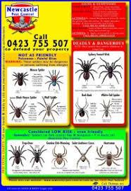 Australian Spider Id Chart Best 25 Spider