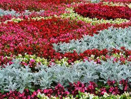 carpet bedding the english garden