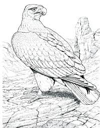 Bald Eagle Coloring Page Coloring Pages Bald Eagle United States