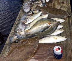 Size Limits To Tighten For Speckled Trout And Flounder Al Com