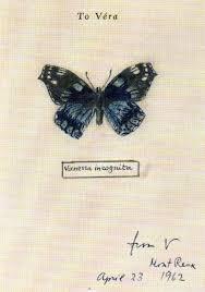vladimir nabokov s scientific butterfly illustrations fine lines vladimir nabokov s scientific art