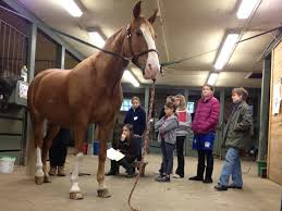 Horse Clubs Northwestern Stables Inc
