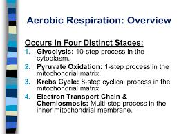 2 2 Cellular Respiration The Details
