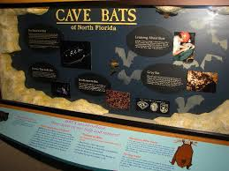 Image result for images of florida caverns state park